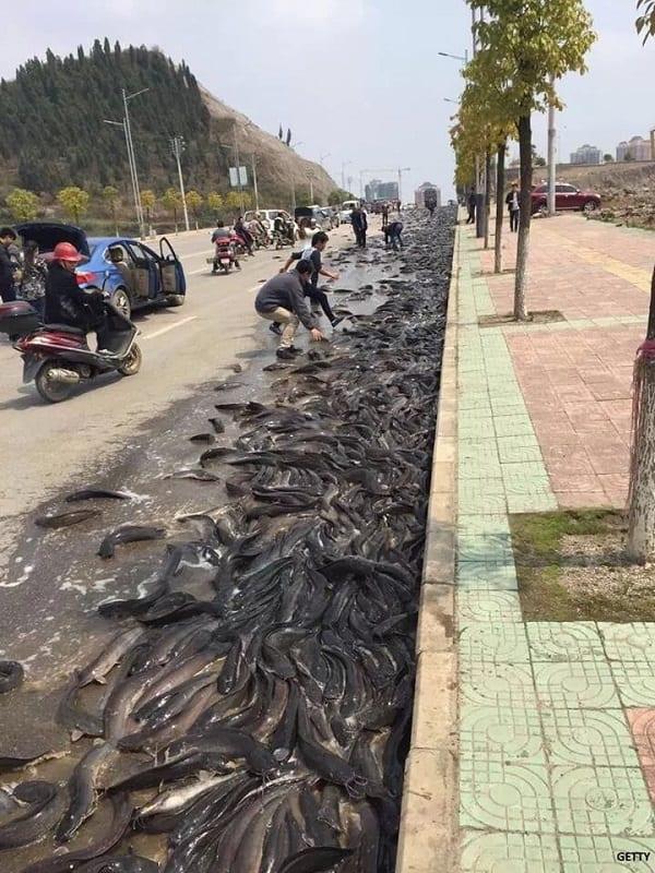 """Une """"pluie de poissons"""" s'abat sur la Thaïlande (photos)"""